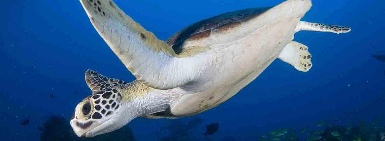Turtle_slider